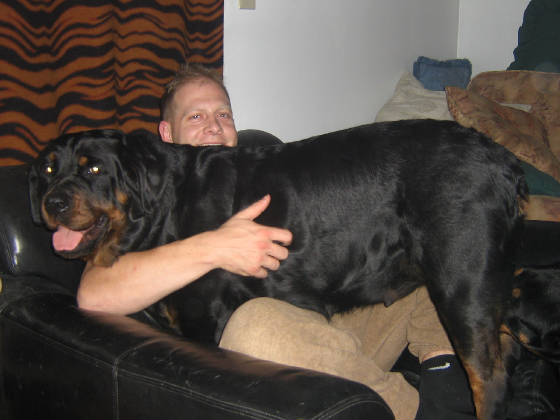 Oversized Rottweilers | Virginia Rottweiler | Kid Friendly